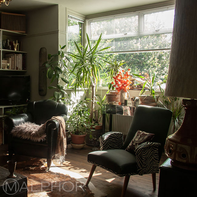 Bay window filled with plants